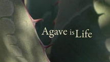Agave Is Live